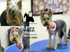 Dog grooming. Grooming salon Odessa. Tairov. The price is inexpensive