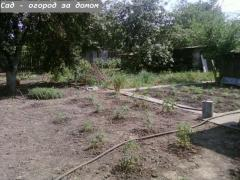 House with large plot of land CHEAP (Nuts about Zaporizhia