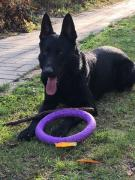 Knit. German shepherd black color (male)