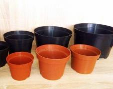 Pots for seedlings, 0,96 - 5 years of Poland wholesale prices