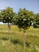 Садоводство, озеленение, ландшафтный-дизайн